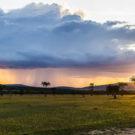 Olarro Conservancy, Maasai Mara, Kenya flickr ninara