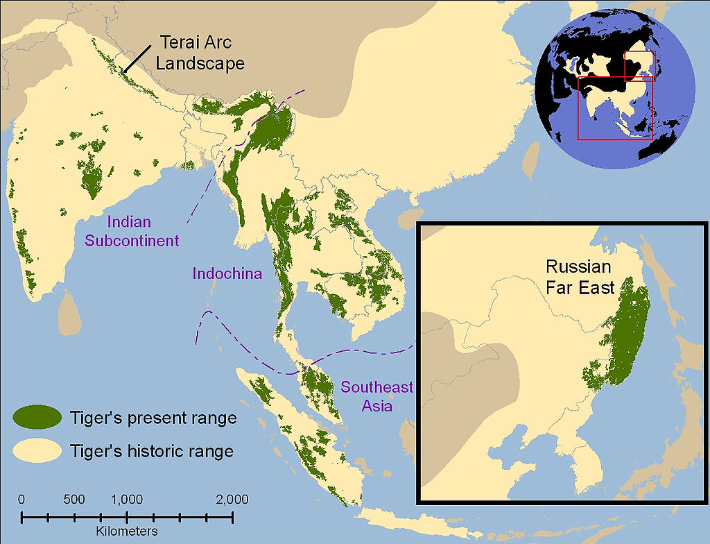 Historical range of tiger is shown in pale yellow and current range (2006) in green. Map source: Fate of Wild Tigers: Sanderson, E., Forrest, J., Loucks, C., Ginsberg, J., Dinerstein, E., Seidensticker, J., Leimgruber, P., Songer, M., Heydlauff, A., O'Brien, T., Bryja, G., Klenzendorf, S., Wikramanayake, E. (2006). The Technical Assessment: Setting Priorities for the Conservation and Recovery of Wild Tigers: 2005–2015. License: Creative Commons Attribution 2.5 Generic