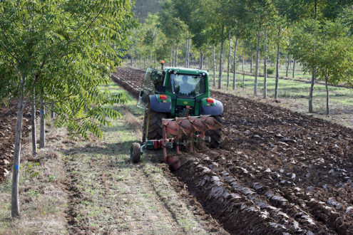Strip intercropping with trees in France. Image courtesy of AgForward
