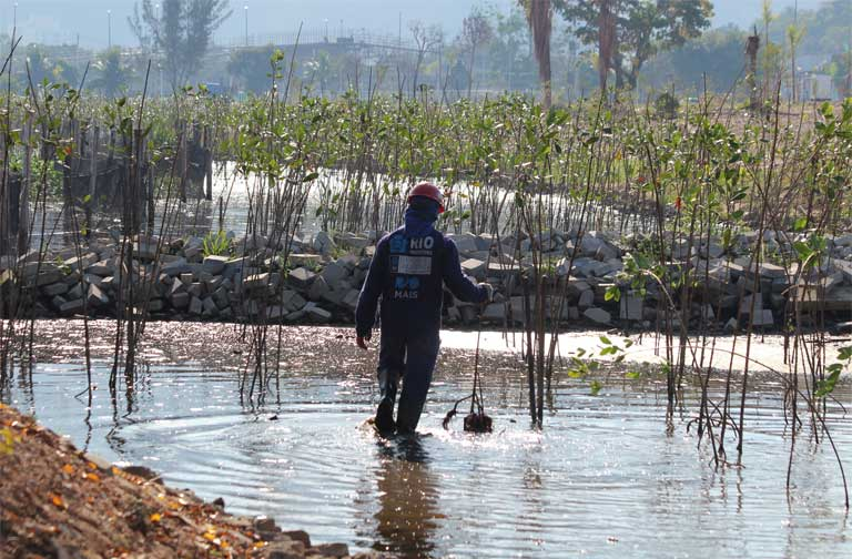 Worker planting mangrove trees in the vicinity of the Olympic Park (July 2016). Photo by Mário Moscatelli