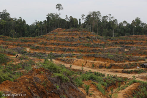 Elephant, orangutan, and tiger habitat cleared in the Leuser ecosystem for oil palm. Photo by Rhett A. Butler