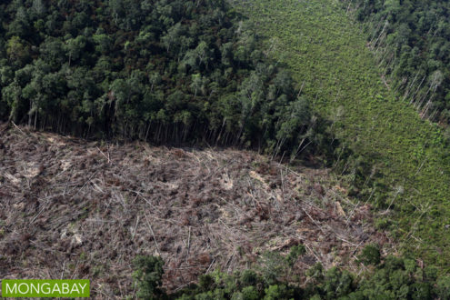 Rainforest cleared for an oil palm plantation in Indonesia. Photo by Rhett A. Butler
