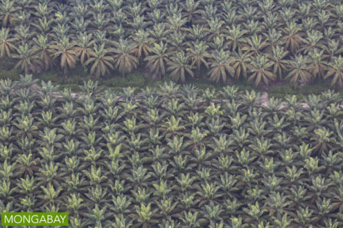 Oil palm plantation in Riau, Sumatra. Photo by Rhett A. Butler.