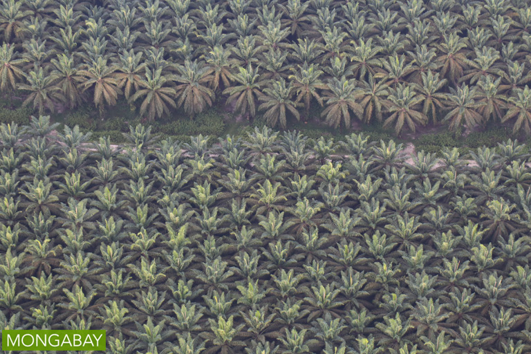 An oil palm estate on the island of Sumatra. Image by Rhett A. Butler/Mongabay.