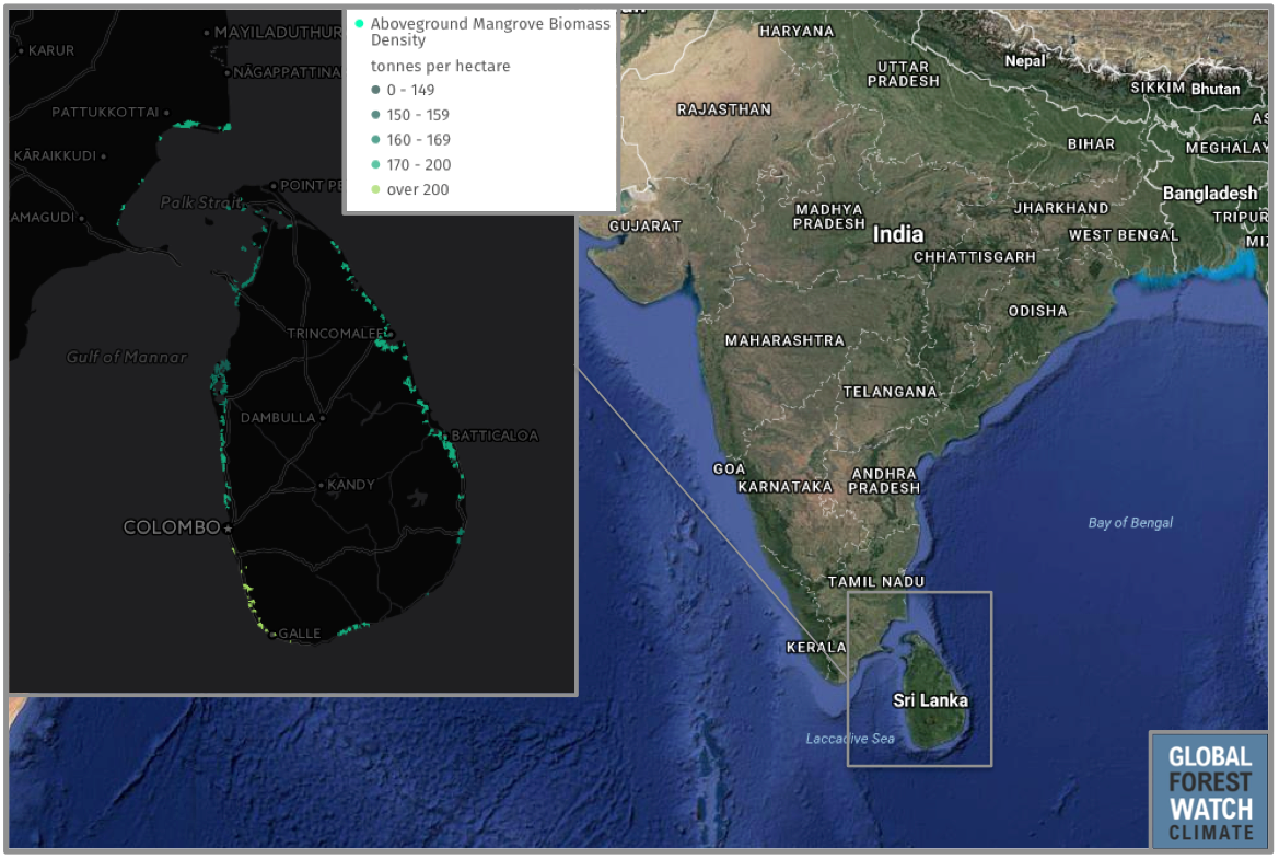 Aboveground biomass is the amount of woody material present above the soil line, and is considered by scientists a proxy by which carbon storage potential can be estimated. Sri Lanka's densest areas of mangroves – and thus its biggest stores of carbon – lie along its southwest coast.