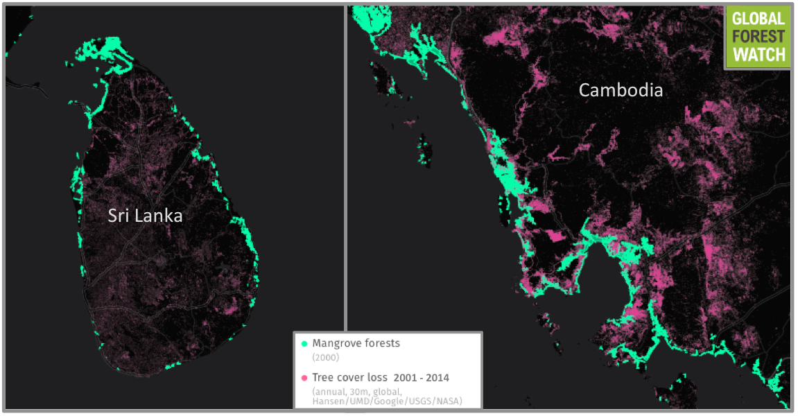 Compared to countries like Cambodia, Sri Lanka's mangroves haven't experienced much degradation in the past 15 years. (Note: images not to scale). Source: Hansen/UMD/Google/USGS/NASA, accessed through Global Forest Watch