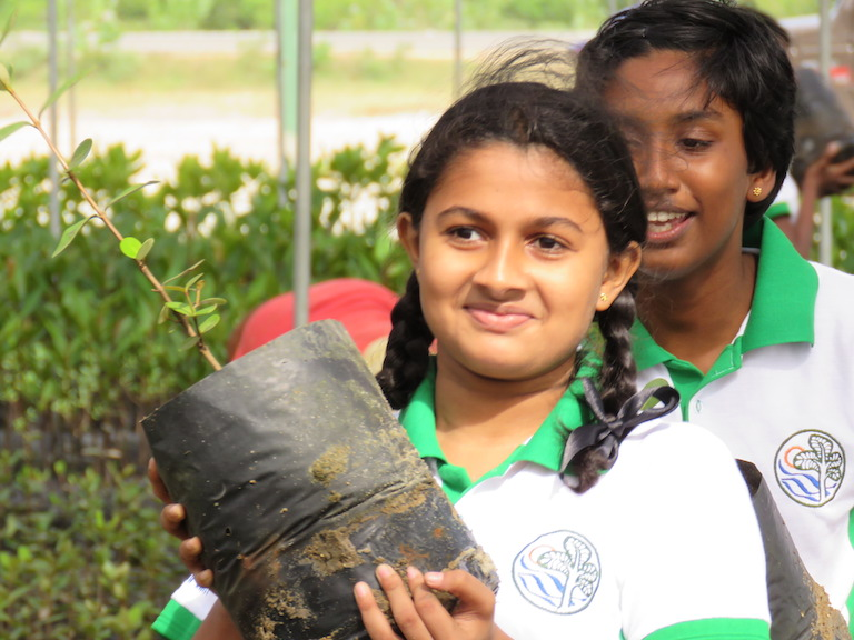 Sri Lankan youth replant mangroves. Photo courtesy of Seacology.