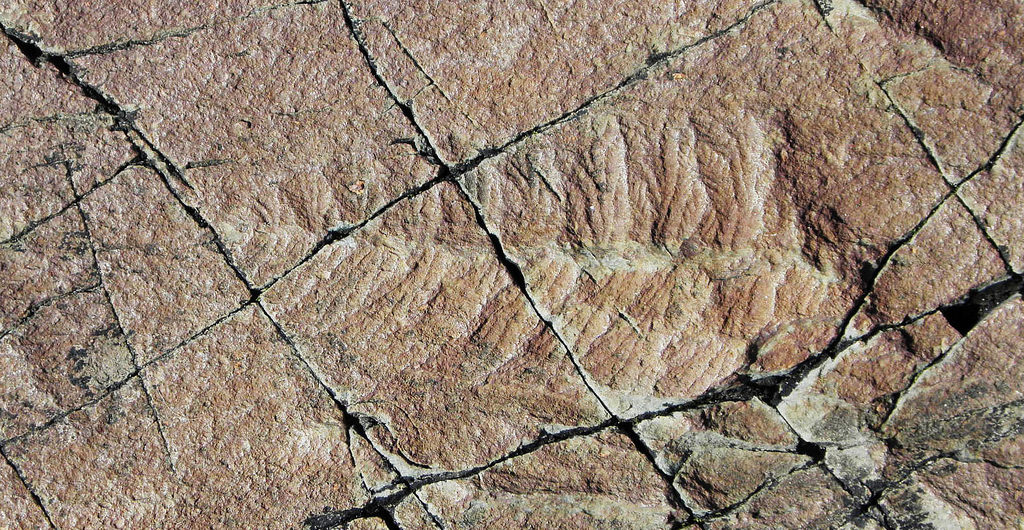 The Mistaken Point in Canada is home to a rich diversity of fossils from 560-575 million years ago preserved in layers of volcanic ash. Photo by djpmapleferryman from Flickr. License: CC BY 2.0.