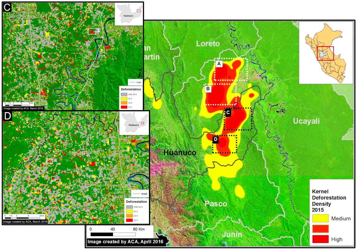 Data from the University of Maryland show the cattle-driven deforestation hotspot extends from the region of Pasco up through Huanuco and well into Ucayali. Data from Data from PNCB/MINAM, UMD/GLAD, MTC; images courtesy of MAAP.