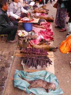 Small-clawed Otter found for sale in a market in Mong La, Myanmar in January 2014. Photo by C. R. Shepherd/ TRAFFIC.