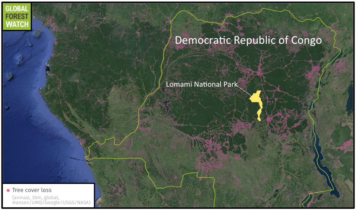 The Democratic Republic of the Congo is experiencing increasing deforestation, with 2014 (the last date for which data are available) seeing the most tree cover loss in the past 15 years. The new Lomami National Park is situated in a region that has been left relatively untouched. Source: Hansen/UMD/Google/USGS/NASA, accessed through Global Forest Watch.