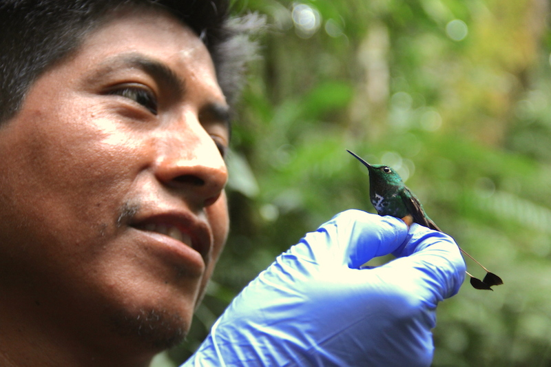 Victor Hugo Garcia examines a hummingbird he caught during the first leg of the expedition last year. Photo by Morgan Erickson-Davis.