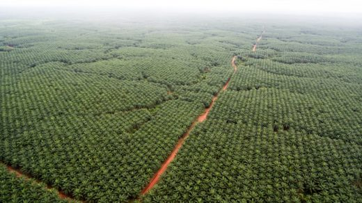 Forest Stewardship Council to keep Korindo in the fold, for now