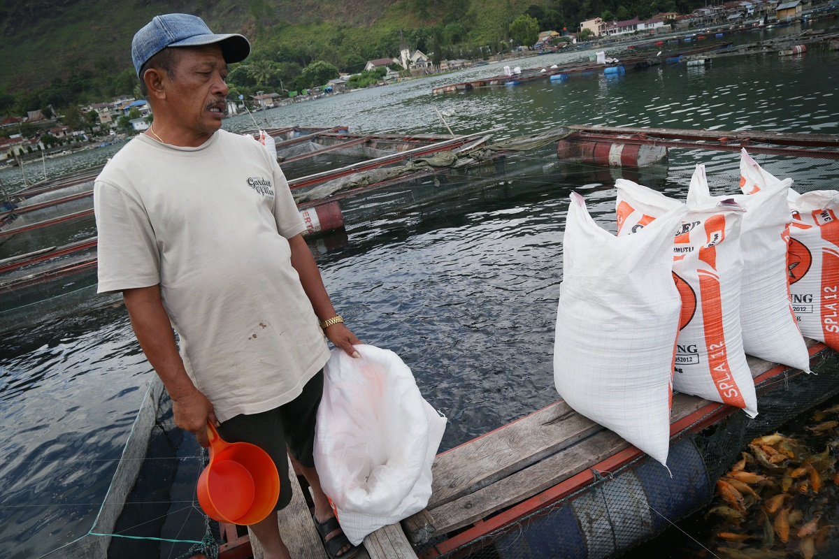 A farmer feeds his fish at a floating cage in Haranggaol. Photo by Aria Danaparamita