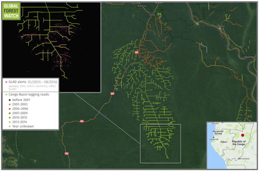 A large network of logging roads is growing in the Republic of Congo. Tree cover loss alerts from the Global Land Analysis and Discovery (GLAD) lab indicate further extension were added in 2015 and 2016.