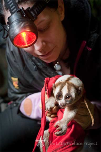Dr. Anna Nekaris with a slow loris in the wild. Photo by Andrew Walmsley