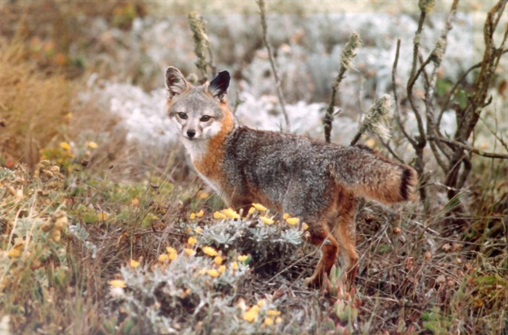The listing process under the Endangered Species Act appears to be biased towards vertebrates, a new study has found. Photo courtesy of National Park Service, US Department of Interior. Public Domain.