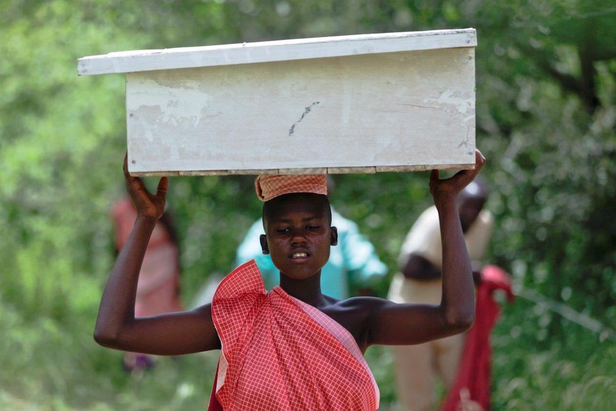 A participant in a program that encourages Tanzanian women to set up bee-keeping businesses carries a hive into the forest. Photo by Felipe Rodriguez/APW