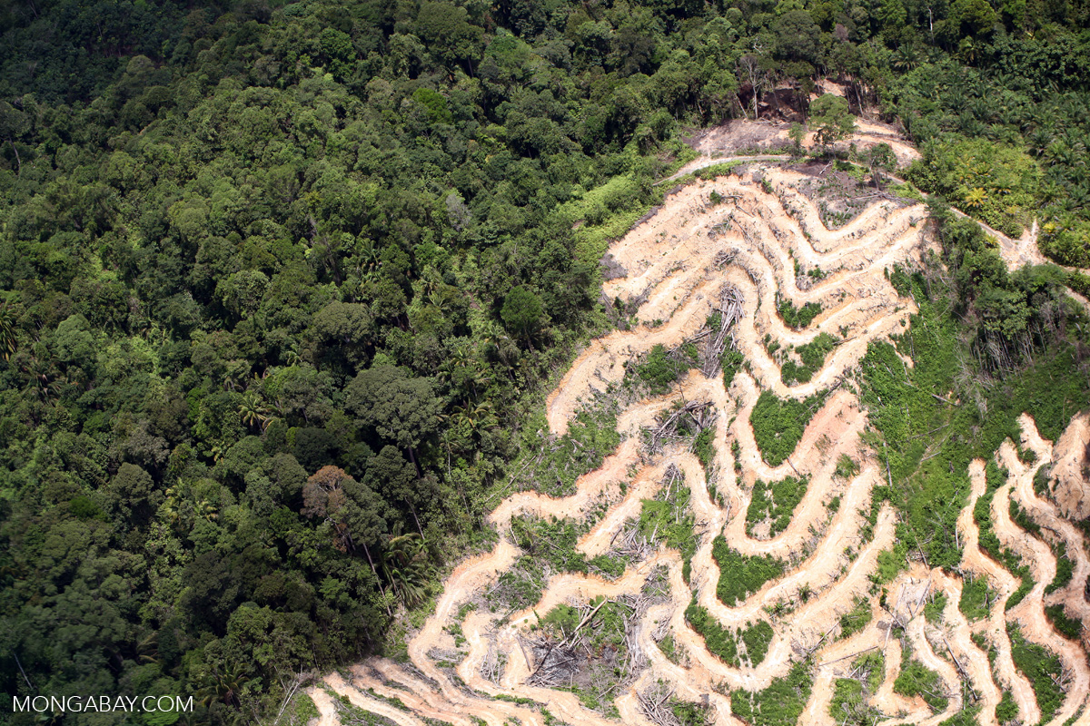 Deforestation in Borneo. Photo by Rhett Butler.
