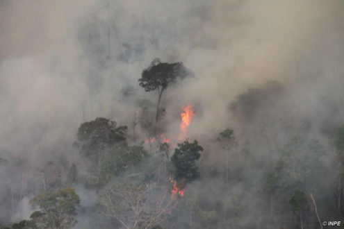 Fires are destroying pre-Amazon forest and threatening to wipe out uncontacted Indians for the second time in less than a year. Photo Credit: © INPE.