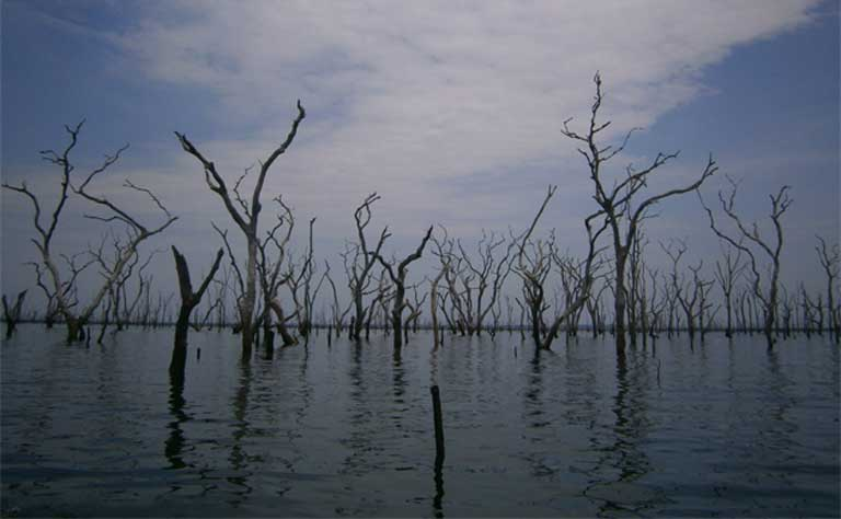 The skeletons of trees submerged within the Balbina reservoir. As vegetation decomposes, methane — a potent greenhouse gas — is released into the atmosphere. Hydropower development can cause a litany of negative social and environmental impacts, despite being promoted as a source of green energy. Photo credit: Isabel Jones