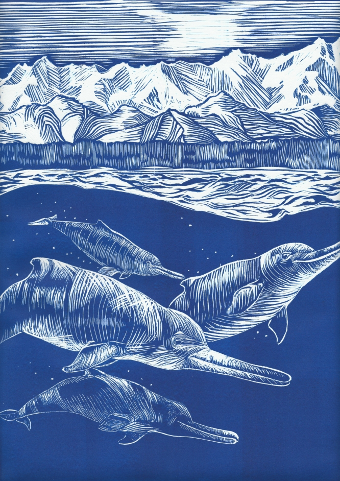 Artistic reconstruction of a pod of Akrtocara yakataga, swimming offshore of Alaska during the Oligocene, about 25 million years ago, with early mountains of Southeast Alaska in the background. Linocut print art by Alexandra Boersma.