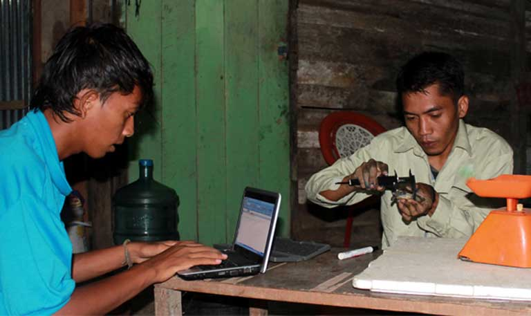 Joko Guntoro (right) and an assistant at work measuring and recording painted terrapins. Photo courtesy of the Satucita Foundation