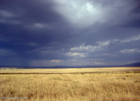 Rainstorm approaching across the Mara savanna (East Africa). Photo by Rhett Butler.