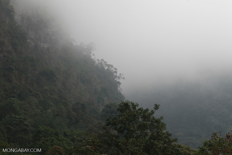 Climate change is resulting in less cloud formation in some cloud forests, drying them out. Photo by Rhett A. Butler