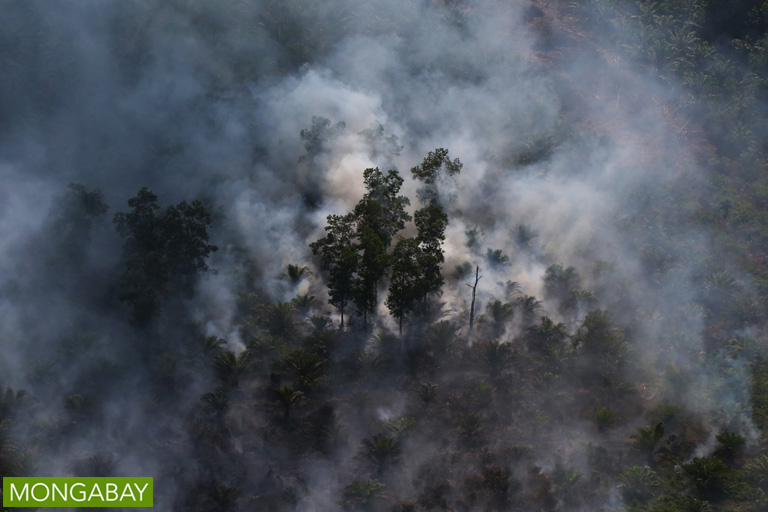 An oil palm plantation in Indonesia burns. Photo by Rhett A. Butler