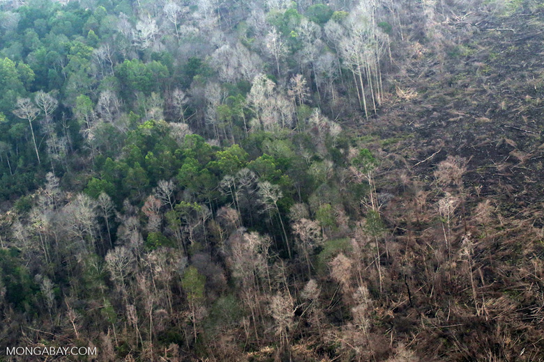Peat forest fire damage in Riau, Indonesia. Tropical rainforests rarely burned in the past, but are seeing serious wildfires as climate change worsens. Photo by Rhett A. Butler