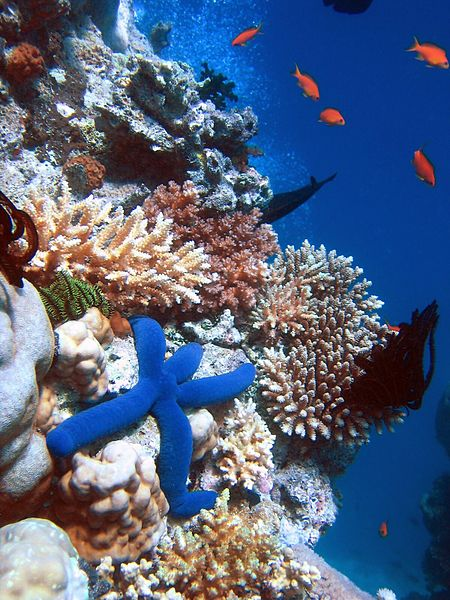 Coral reef biodiversity is seriously threatened by climate change. Photo by Richard Ling licensed under the terms of the GNU Free Documentation License, Version 1.2 or any later version