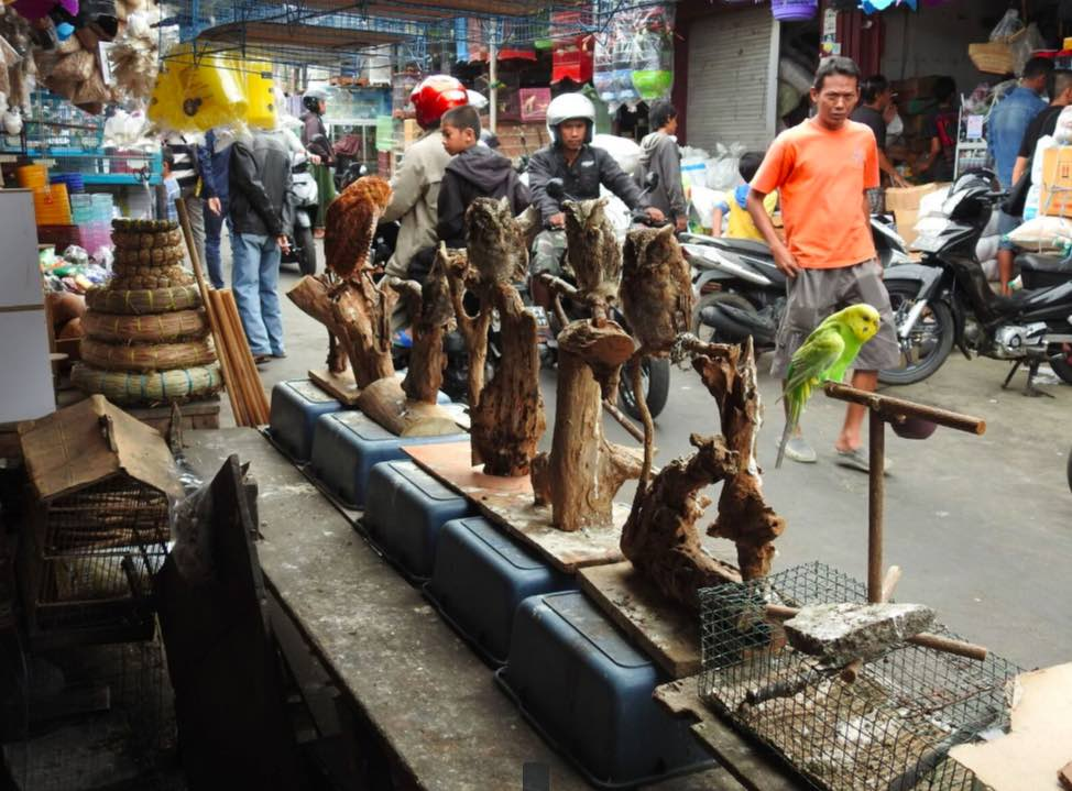 Market scene at Malang with a number of owls in display in foreground. Photo credit: Heru Cahyono/TRAFFIC.