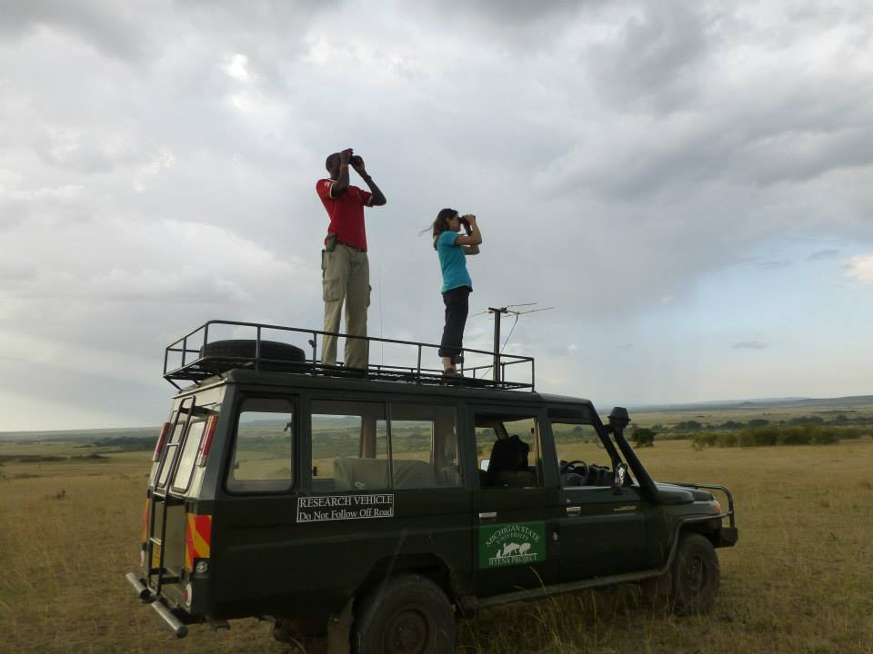 In the field, spotting for spotted hyenas, Julia Greenberg (right) and research assistant Wilson Kilong (left). Photo courtesy of the MSU Mara Hyena Project