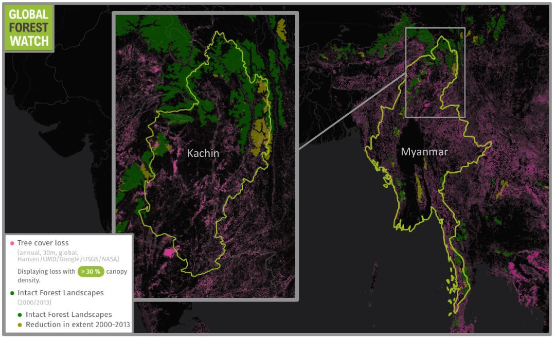 Myanmar lost more than 2 million hectares of tree cover from 2001 through 2014. One of the states most affected by logging is Kachin, which lies along the country's northeastern border with China. The state contains some of Myanmar's most extensive intact forest landscapes - particularly large, continuous tracts of primary forest - home to endangered Indochinese tigers (Panthera tigris corbetti).
