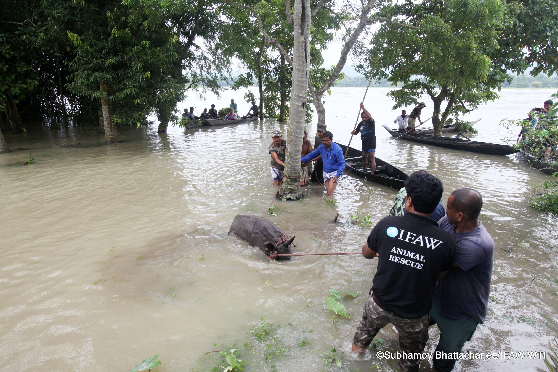 Kaziranga_27 jul 2016_flood status_rhino rescue_Subhamoy Bhattacharjee_IFAW-WTI (19)