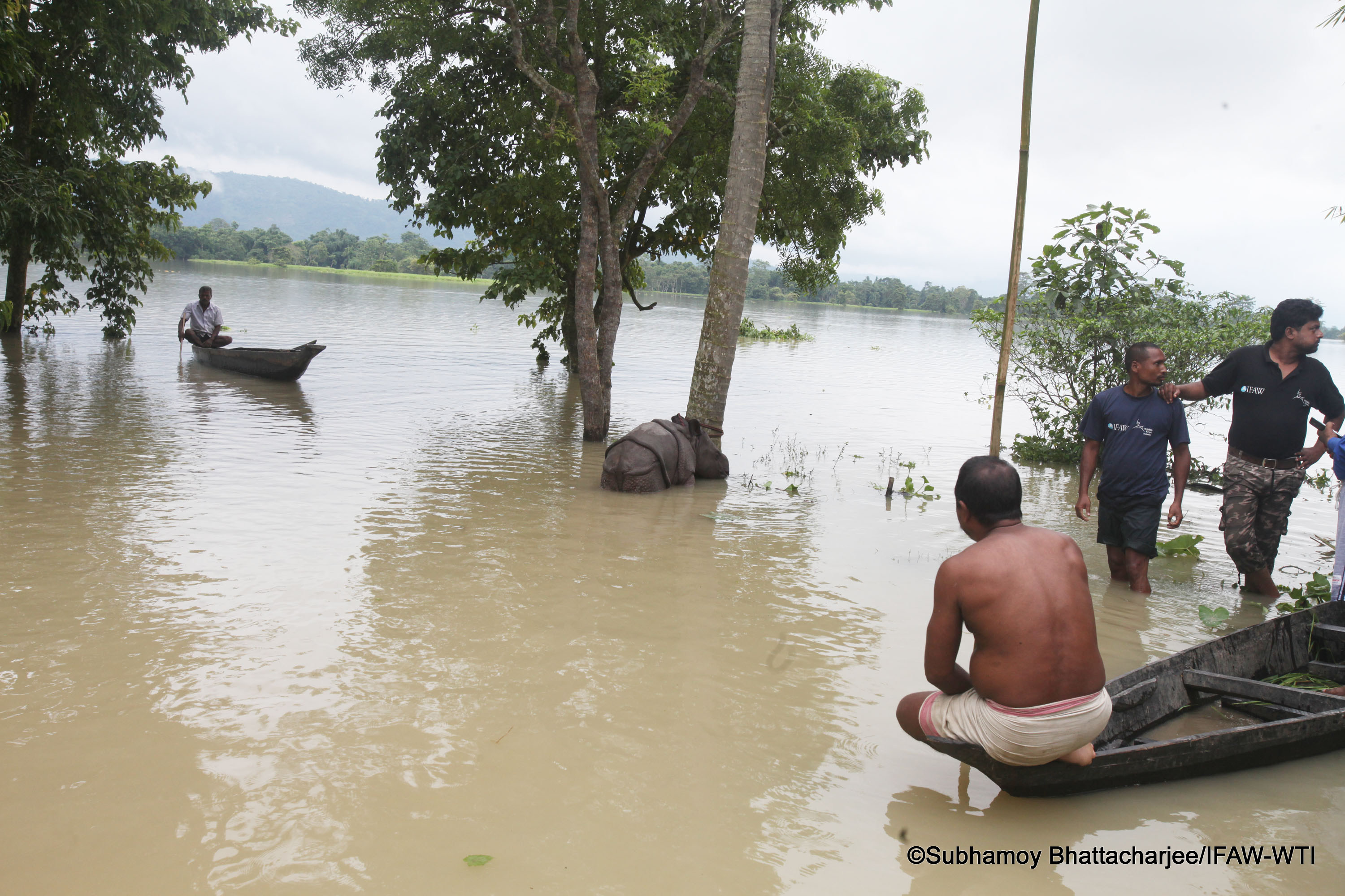 Kaziranga_27 jul 2016_flood status_rhino rescue_Subhamoy Bhattacharjee_IFAW-WTI (16)