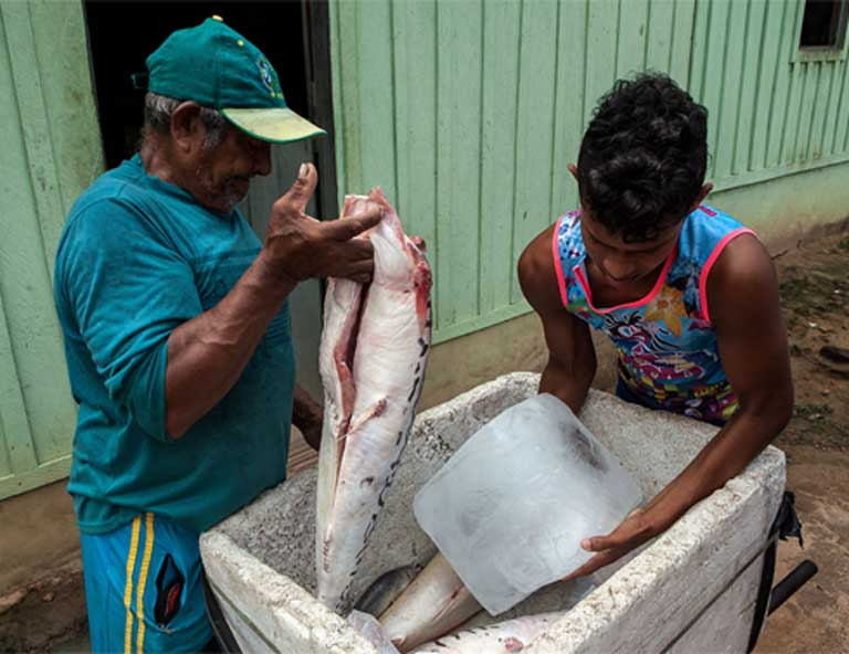 In the Tapajós Basin, fish is the foundation of people's food and livelihood. The EIS for the proposed the São Luiz do Tapajós hydroelectric dam states that fish habitat and populations will be negatively impacted by the dam. Photo by Lilo Clareto/Repórter Brasil