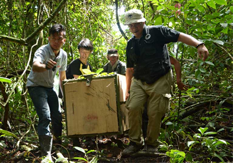 Releasing a rehabilitated Sun bear. Photo by Chiew Lin May at the Bornean Sun Bear Conservation Centre