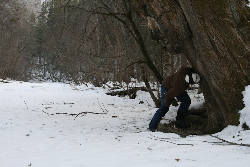 Jonathan Slaght sniffs at the earthy aroma of an Amur tiger scent tree along a frozen river in the Sikhote-Alin Biosphere Reserve. Credit: Amur-Ussuri Centre for Avian Biodiversity
