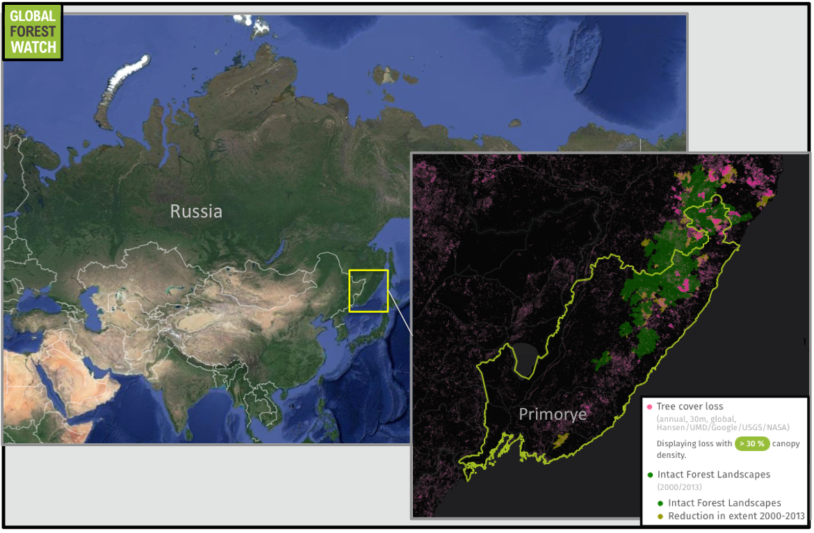 Primorye occupies far southeastern Russia, bordering China, North Korea, and the Sea of Japan. Logging pressure and wildfires have degraded parts of its remaining Intact Forest Landscapes in recent years.