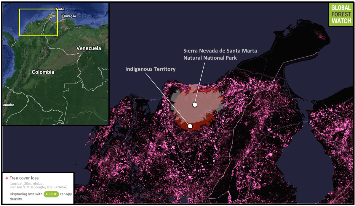 Global Forest Watch shows heavy tree cover loss in the area surrounding the Indigenous reserves and Sierra Nevada de Santa Marta Natural National Park.