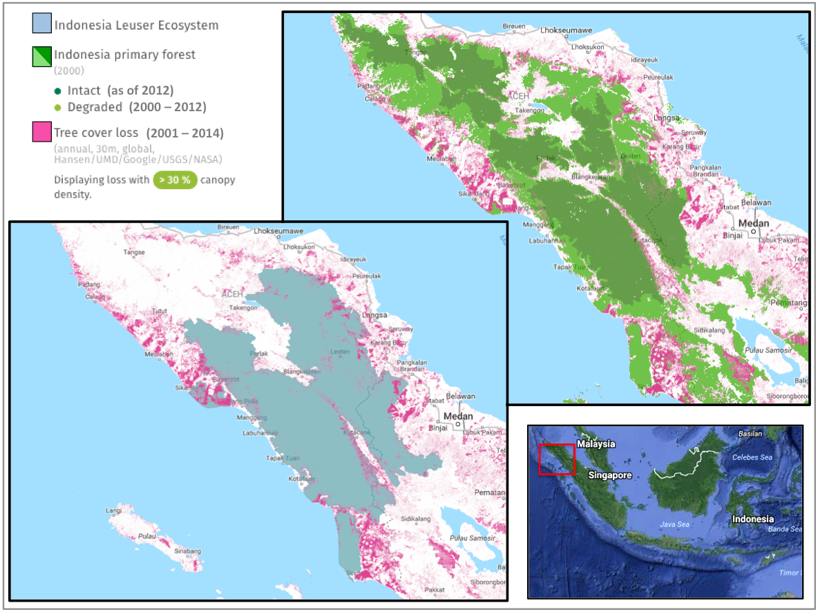 From 2001-2014, the region comprising the Leuser Ecosystem lost 145,000 hectares of tree cover, according to Global Forest Watch data. This includes both deforestation and tree plantation harvesting. The region lost around 63,000 hectares of primary forest, which is about 3 percent of its primary forest cover.