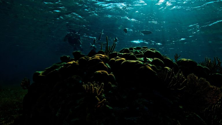 coral_reef_goffs_caye