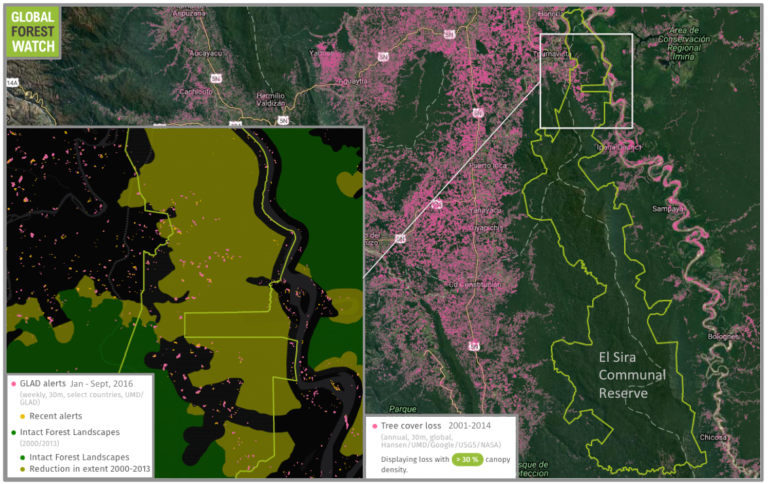 El Sira Communal Reserve has acted somewhat like an island in a sea of deforestation, but the recent MAAP analysis indicates it is not completely immune from conversion pressure.