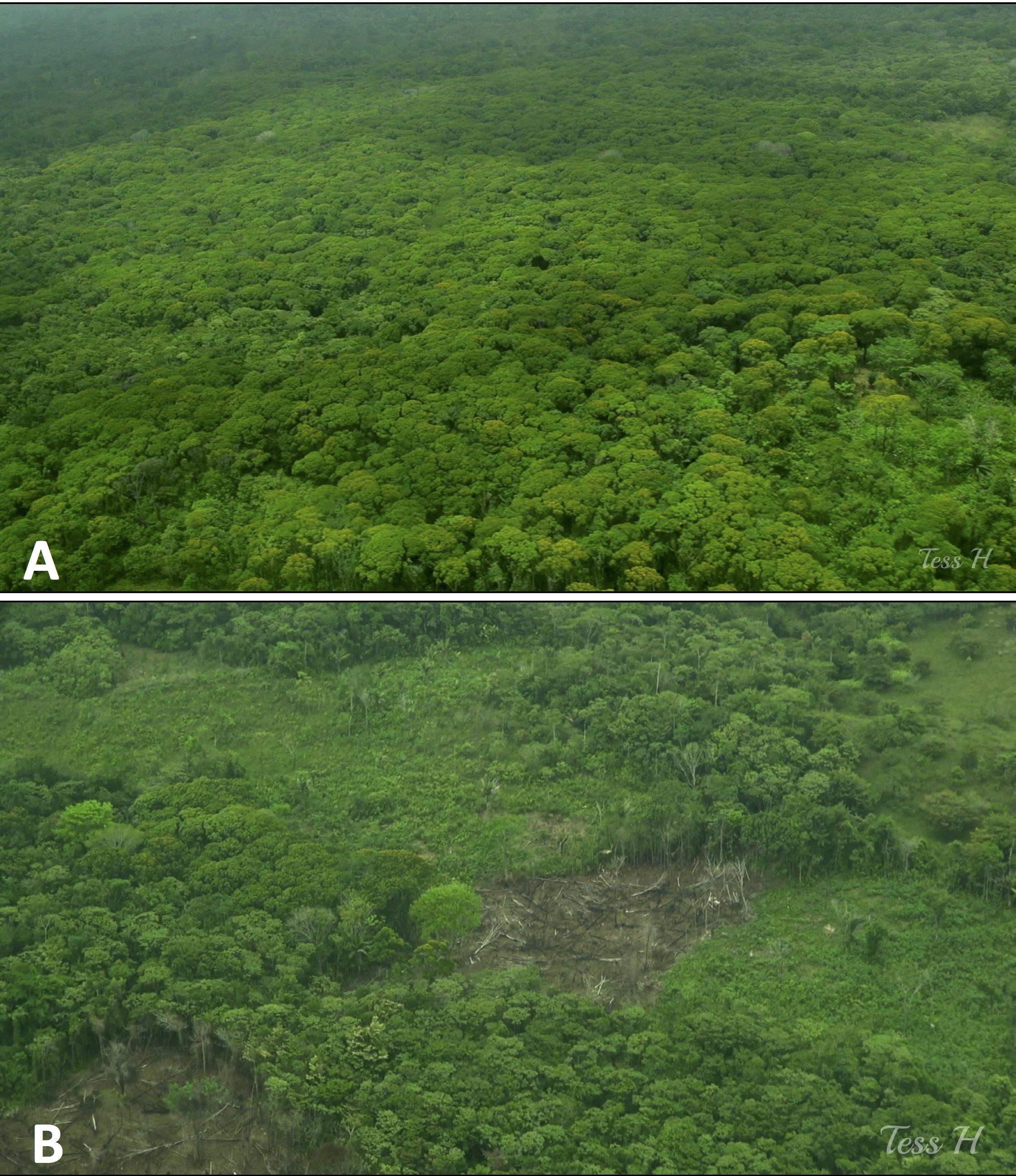 photo-2-unbroken-landscape-and-deforestation-cerro-silva