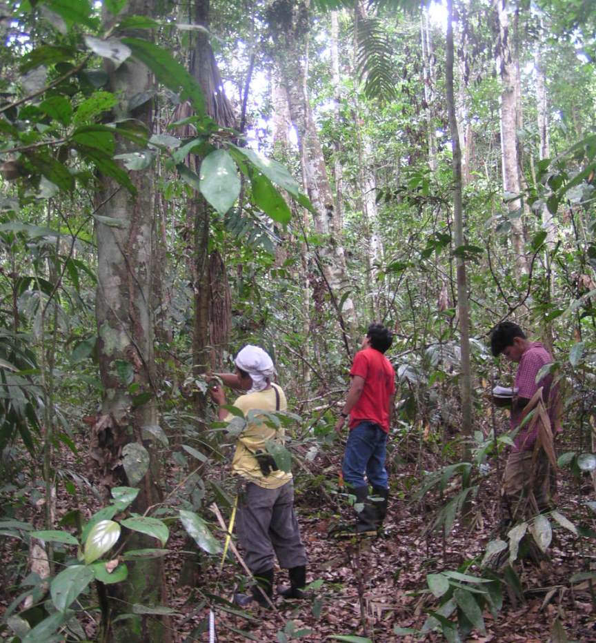 Measuring tree and canopy data in a forest study plot in Peru.