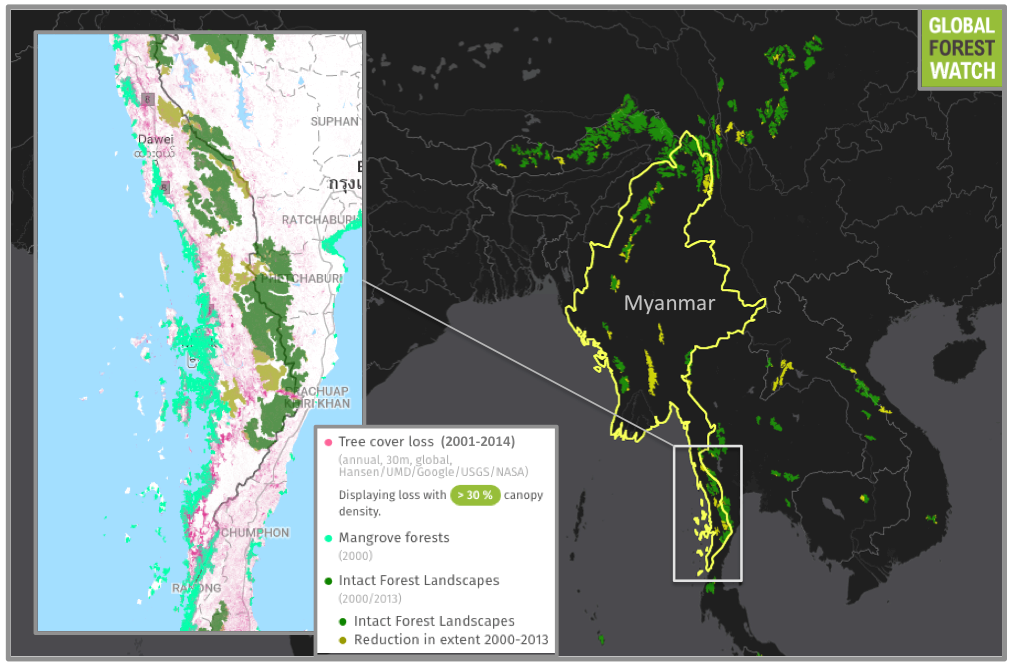 Tanintharyi is Myanmar's southernmost province, and still contains Intact Forest Landscapes (IFLs), as well as large swaths of mangroves. However, many of these IFLs have been degraded since 2000 and deforestation has been on the rise, with more tree cover lost in 2014 than in any other year since measuring began in 2001.