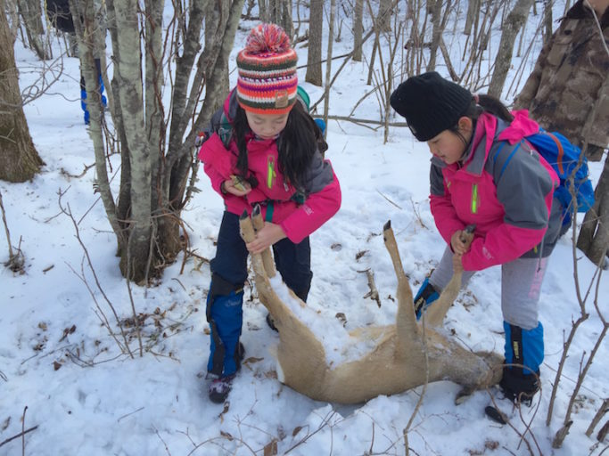Young volunteers find a Siberian roe deer trapped in a poacher's snare in January, 2016. Photo courtesy of Global Protected Area Friendly System