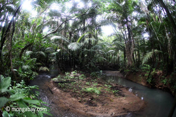 rainforest-ujung-kulon
